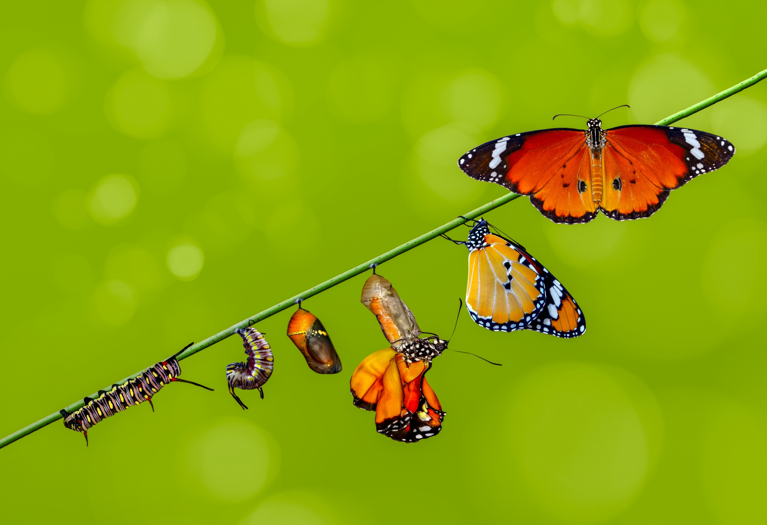 The birth of butterflies 2021