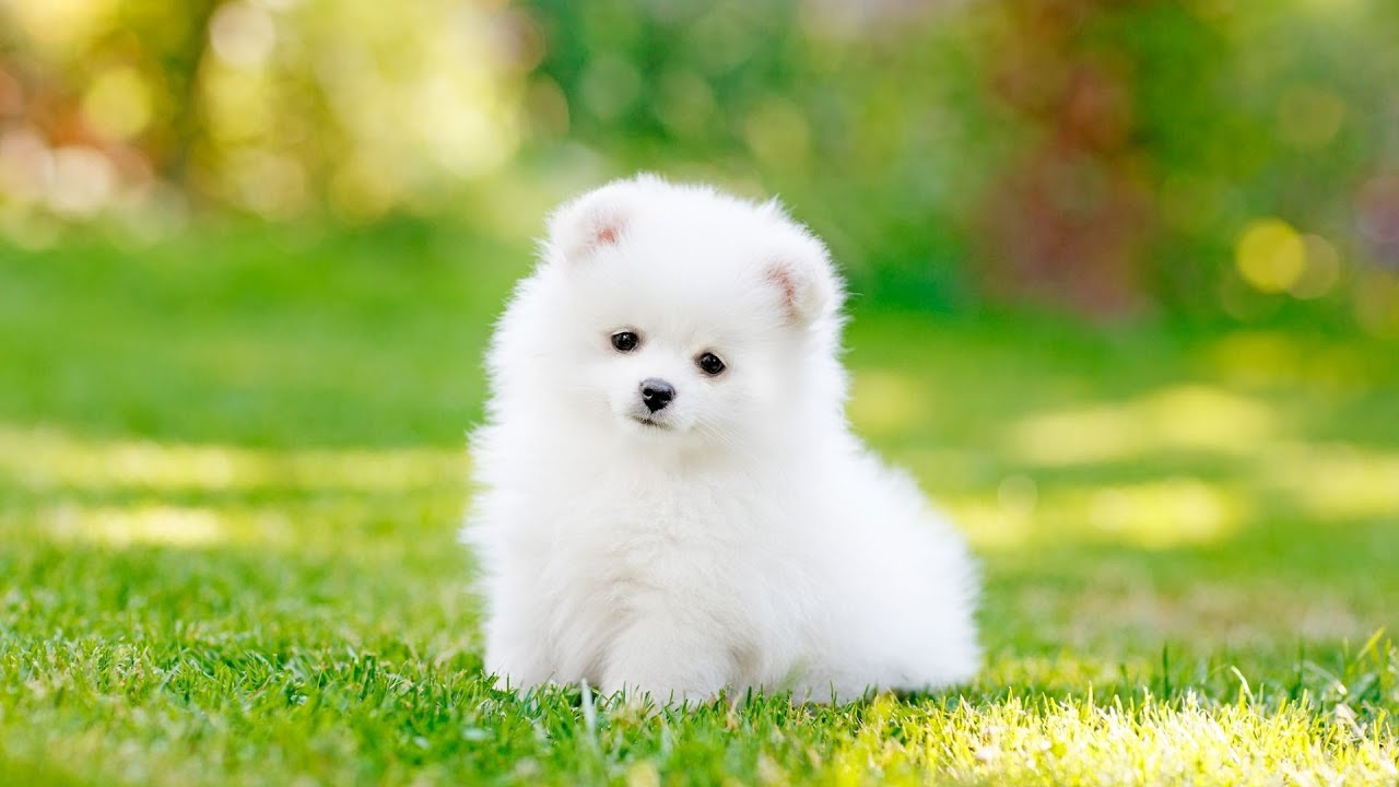 PUPE Dogs pictures